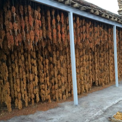 تولید سنتی کشمش