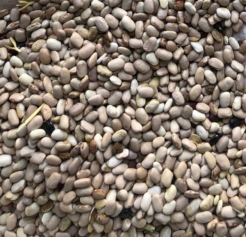 ضایعات لوبیا سفید